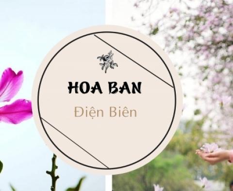 Tour ghép du lịch Sơn La - Điện Biên 3 ngày 2 đêm mùa Hoa ban tháng 3