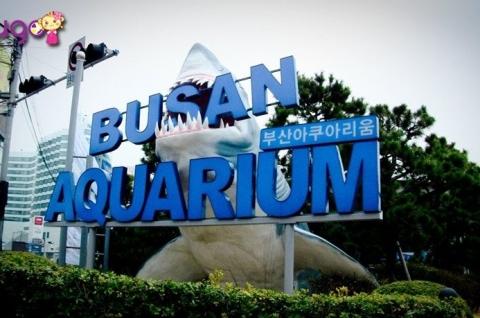 Tour du lịch Khám Phá Thành Phố Busan Hàn Quốc