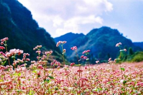 Tour ghép du lịch Hà Giang Lũng Cú Đồng Văn hàng tuần