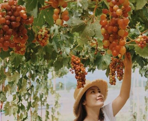 Du lịch Phan Rang Ninh Thuận Nha Trang 4N3Đ từ Hà Nội