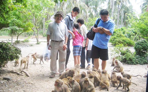 Monkey island_ Cat Ba Tour